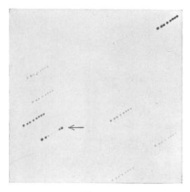 driftscan_plates_pickering_apj_1898.png